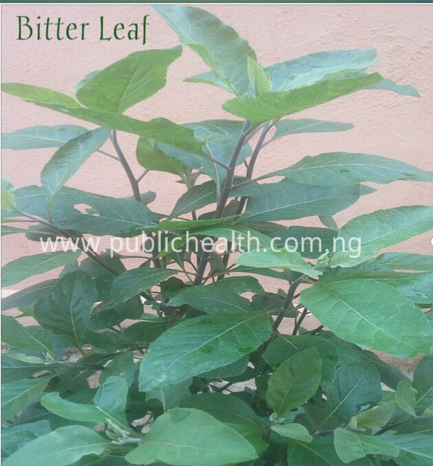 benefits of bitter leave, wonders of bitter leaf , natural remedies , bitter leaves and diabetes