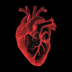 coronary heart disease, heart failure , how to prevent heart diseases