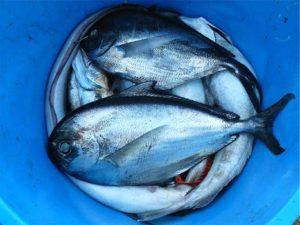 fishes and bipolar disorder,bipolar test, bipolar natural remedies , gene testing for bipolar disorder