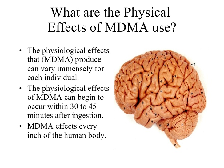 effects of MDMA