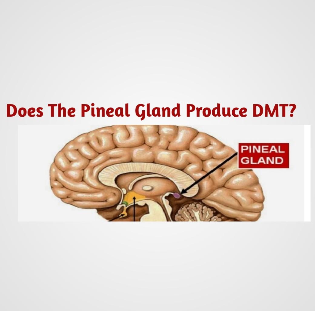 Pineal Gland DMT - Public Health