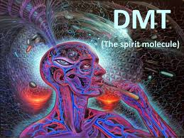 how long does dmt stay in your system