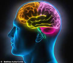 Facts About Your Brain You Should Know
