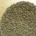 Millet health Benefits