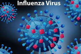 Influenza and kissing