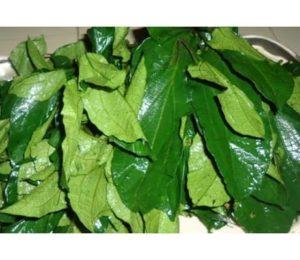 ugwu leaf