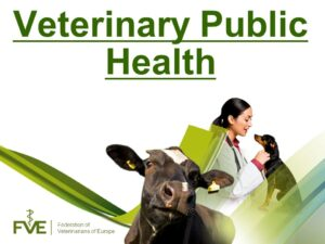 How To Become a Public Health Veterinarian In Nigeria