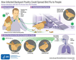 Avian influenza (Bird Flu) in Nigeria