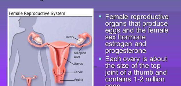 Menstrogen tablet 2