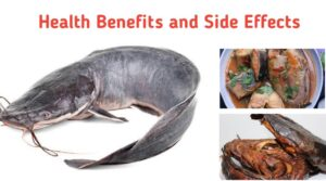 Health Benefits and Side Effects of Catfish | Public Health