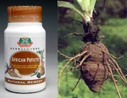 African Wild Potatoes Cure Cancer