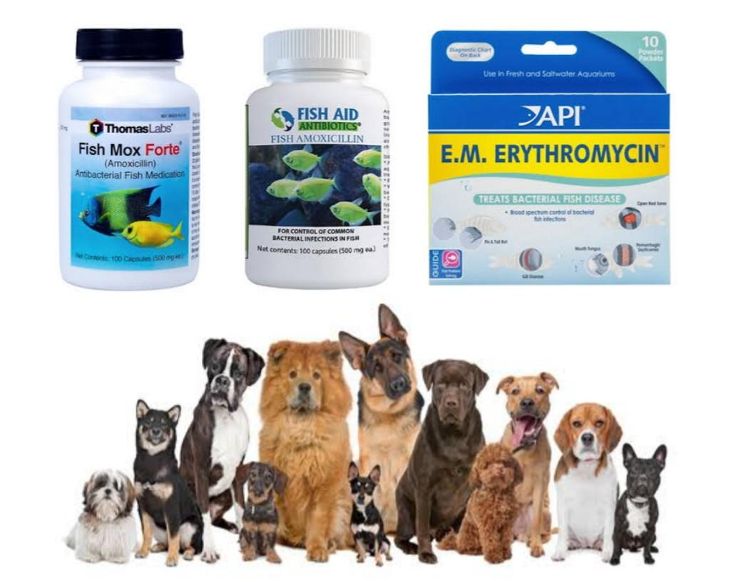 Can You Use Fish Antibiotics On Dogs