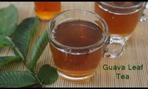 Guava leaf and fertility
