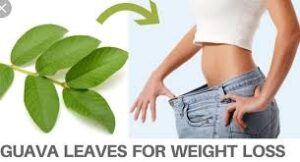 How To Use Guava Leaves For Flat Tummy