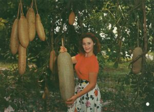 How to Prepare Sausage (Kigelia Africana) Tree fruit