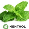 Does Menthol Come From
