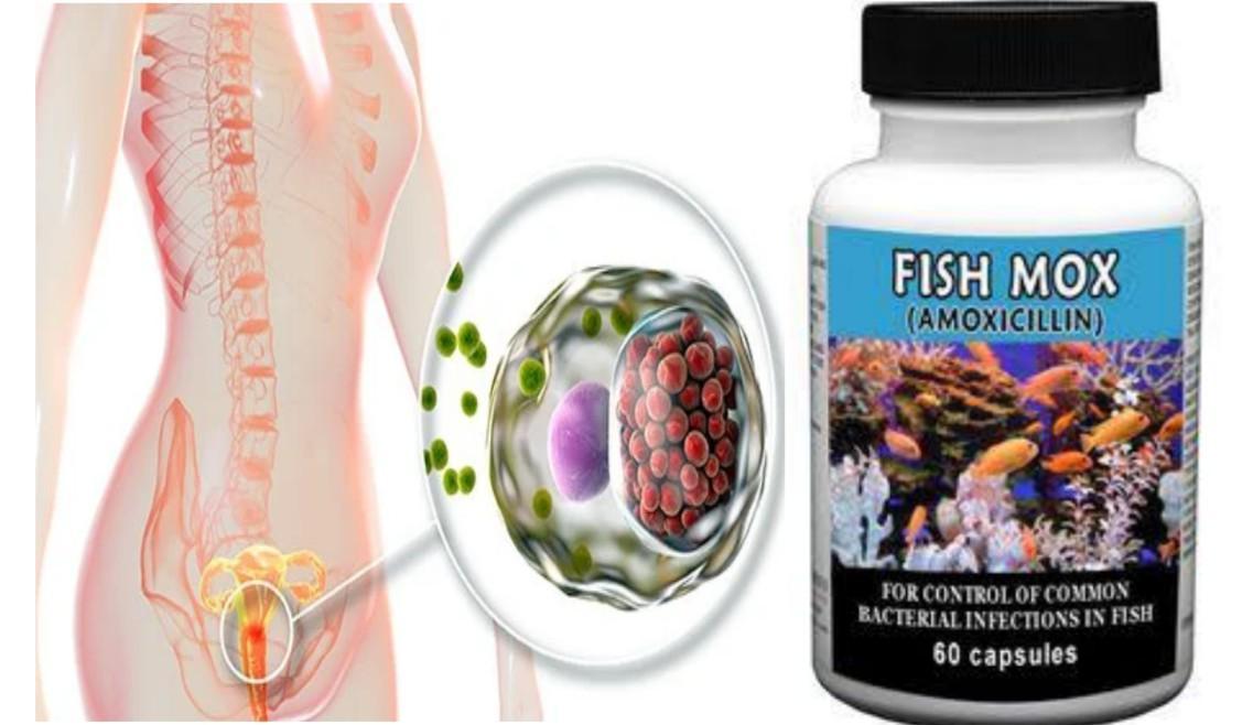 Will Fish Antibiotics Cure Chlamydia