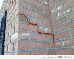 Can Snakes Climb Walls