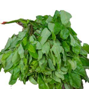 oha leaf health benefits