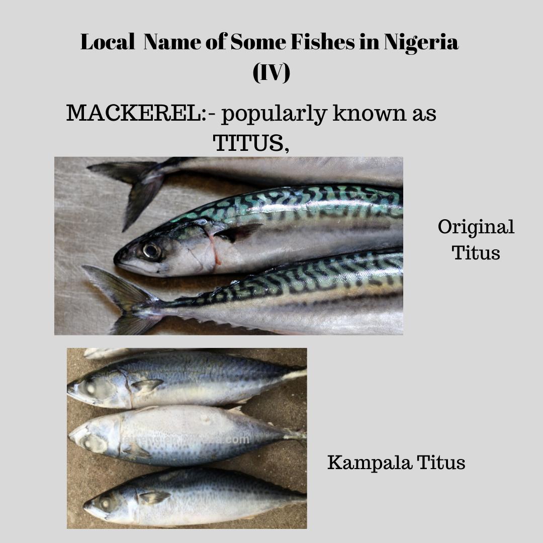 Fake titus fish