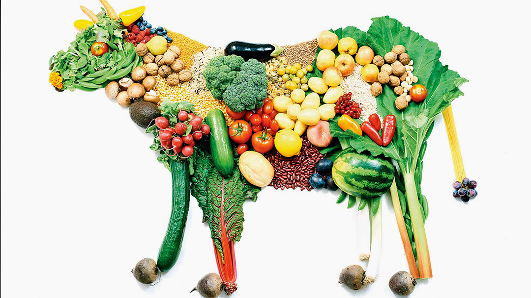 Why You Should Be a Vegetarian