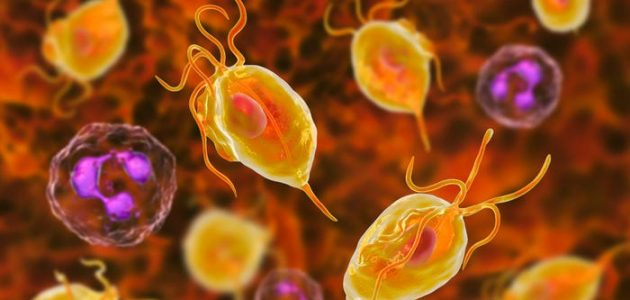 How Long Does Metronidazole Take To Cure Trichomoniasis